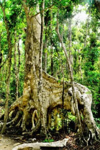 cenote-26